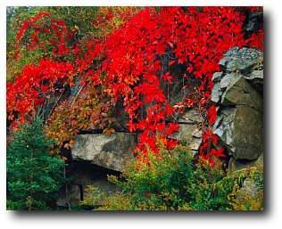 fall foliage in new england maine fall foliage fall